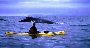 Kayak and Whale, Quirpon Island, Western Newfoundland